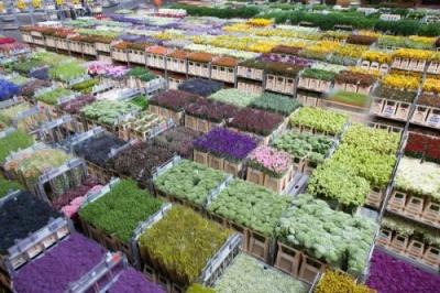 Những chợ hoa nổi tiếng bậc nhất thế giới