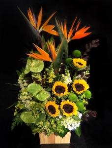 Hoa Hộp 09