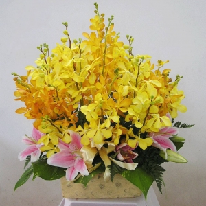 Hoa Hộp 119