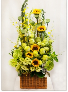 Hoa Hộp 15
