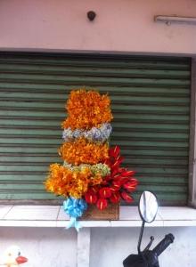 Hoa Hộp 65