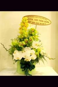 Hoa Hộp 256