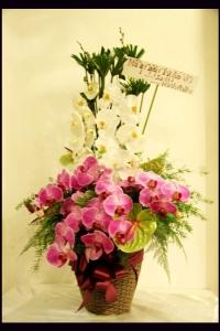 Hoa Hộp 257