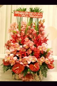 Hoa Hộp 258